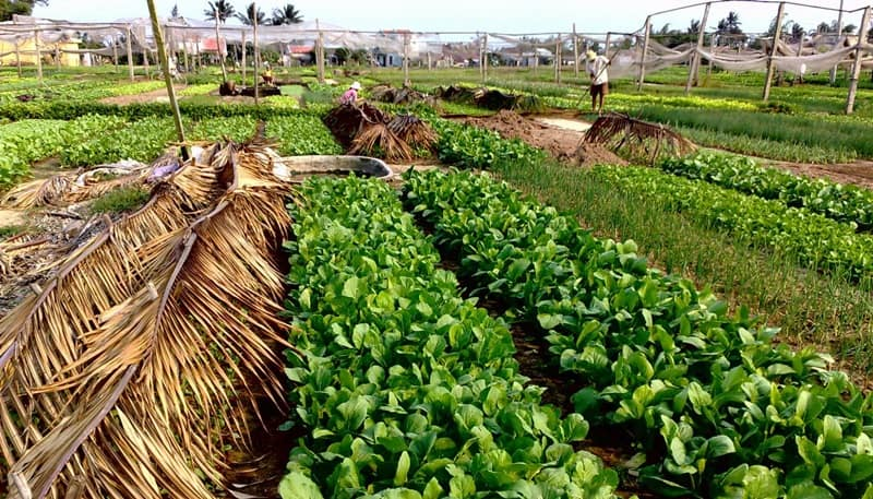 Tra Que Village – Herb & Vegetable Farming